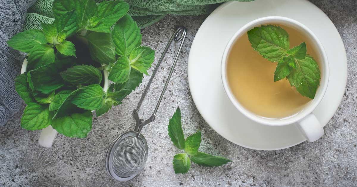 12 avantages scientifiques du thé à la menthe poivrée et des extraits