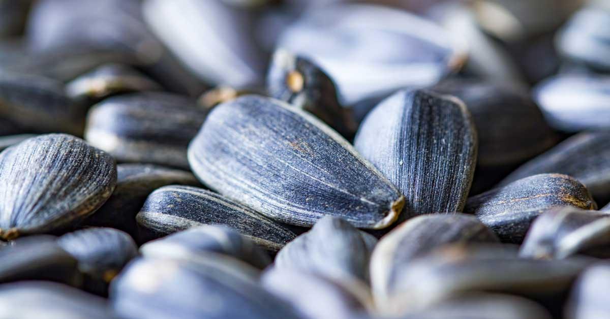 Nutrition, bienfaits pour la santé et comment les manger