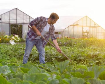 The Clean Fifteen: 15 aliments pauvres en pesticides