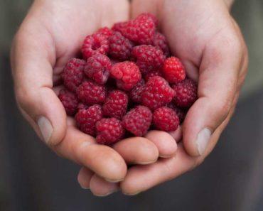 Framboises rouges: valeur nutritive, avantages et plus