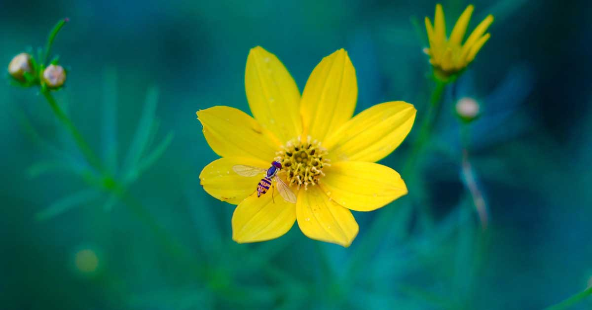 Top 11 des bienfaits du pollen d'abeille pour la santé
