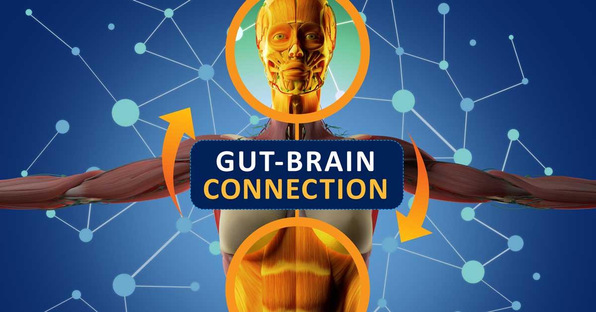 La connexion cerveau-intestin: son fonctionnement et le rôle de la nutrition