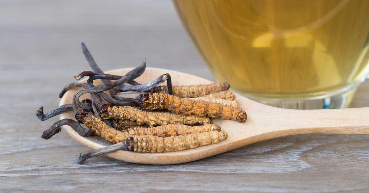 6 avantages de Cordyceps, tous soutenus par la science