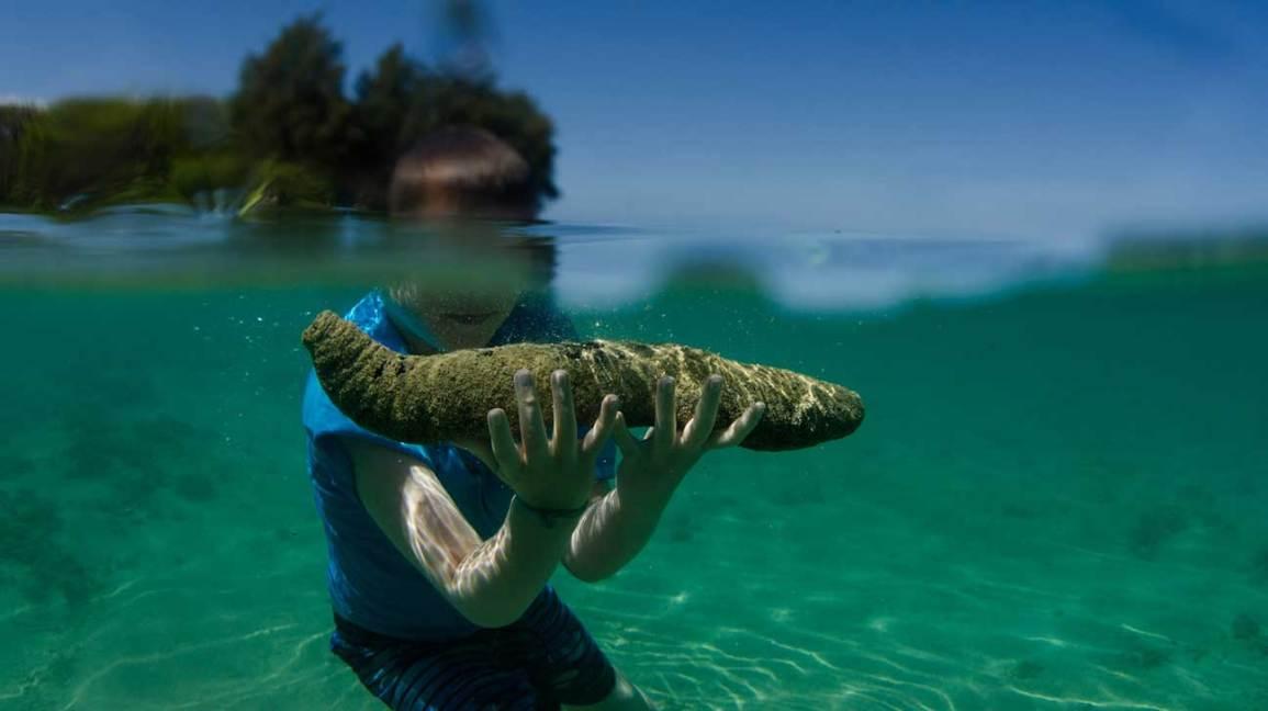 Avantages pour la santé des aliments concombres de mer