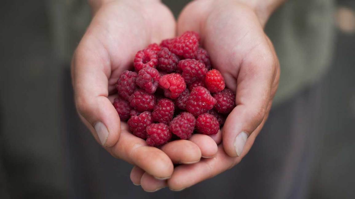 Framboise Nutrition