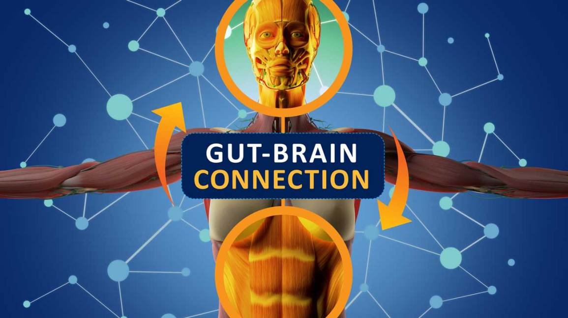 Connexion intestin-cerveau