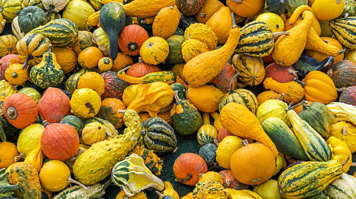 Fruits ou légumes de courge