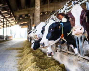 La laiterie est-elle mauvaise ou bonne pour vous? La vérité laiteuse et cheesy