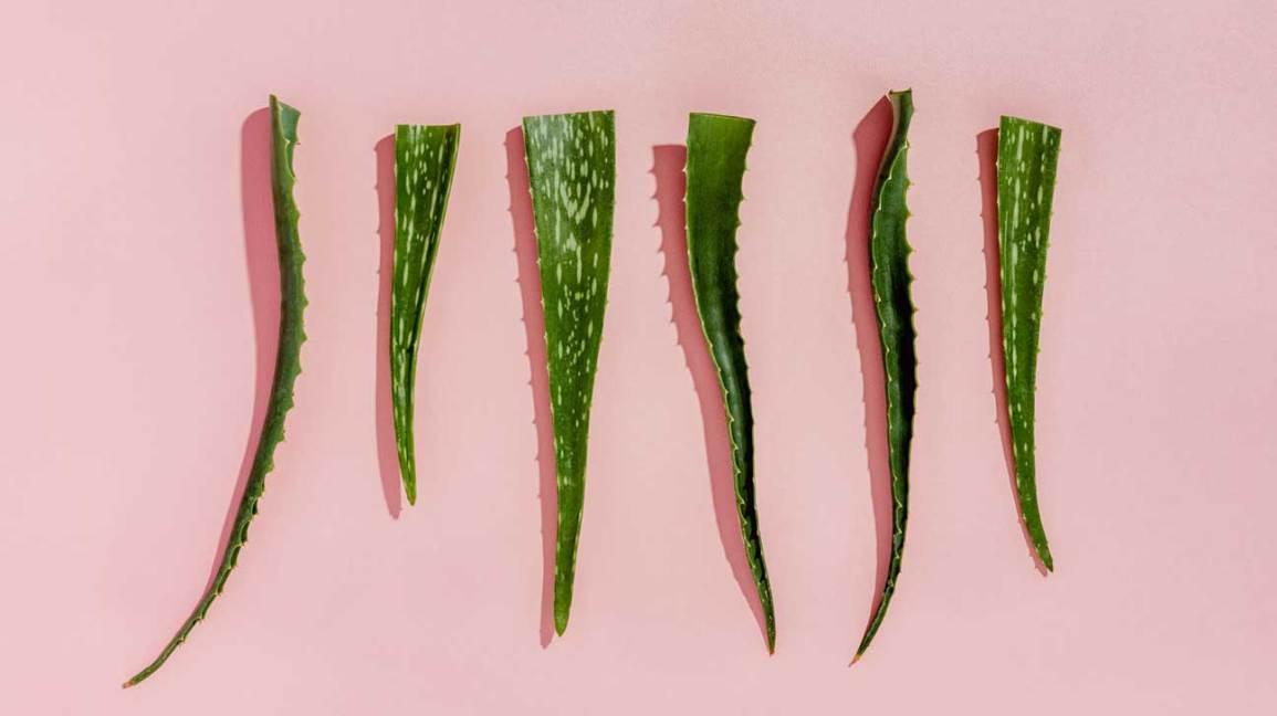 Pouvez-vous manger aloe vera