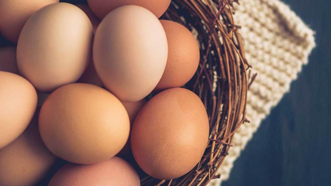 Avantages pour la santé des œufs