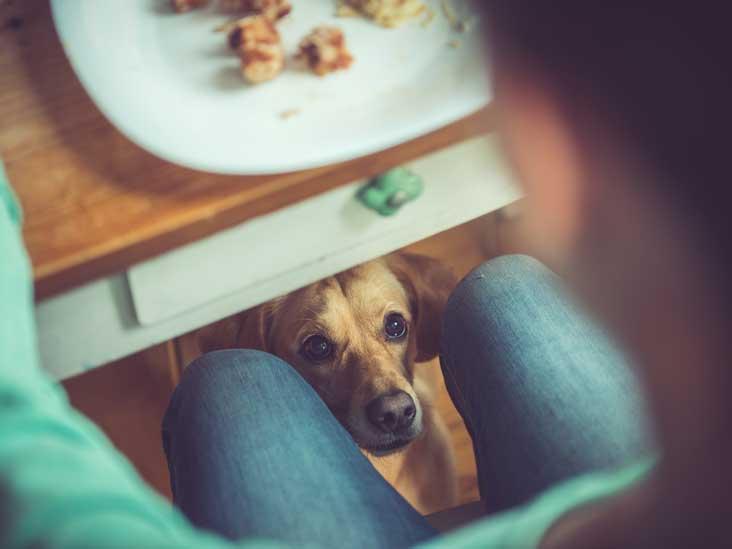 Est-ce que mon chien peut manger ça? Une liste d'aliments humains que les chiens peuvent et ne peuvent pas manger