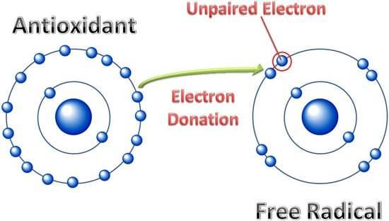 Diagramme Antioxydants vs Radicaux Libres