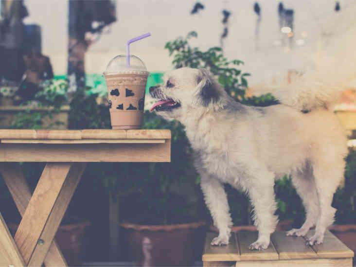 7 aliments humains qui peuvent être fatals aux chiens
