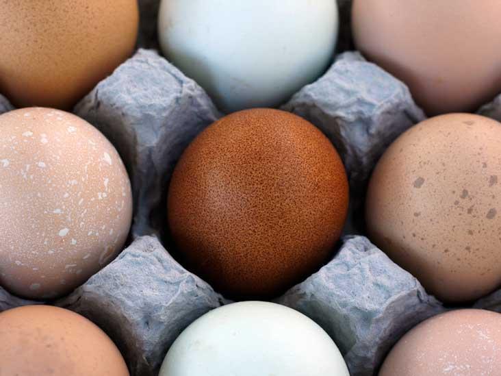 Brown vs White Eggs - Y a-t-il une différence?