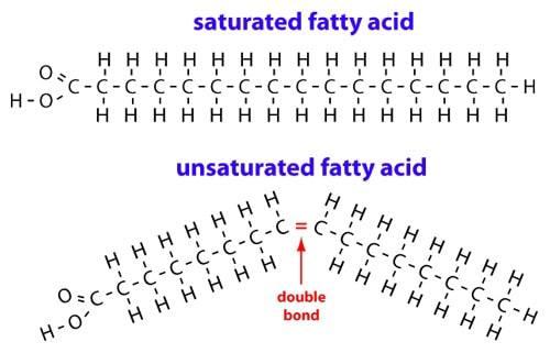 Graphique des obligations d'acides gras