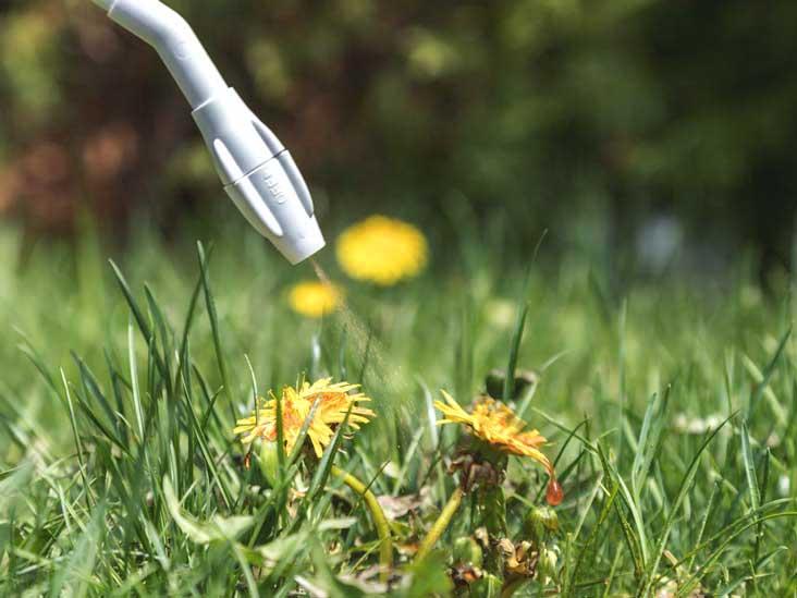 Le tueur de mauvaises herbes Roundup (glyphosate) est-il mauvais pour vous?