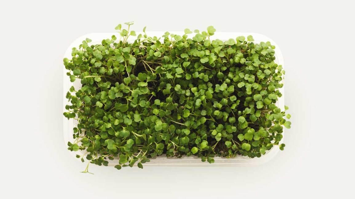 Microgreens dans un récipient en plastique