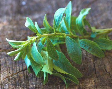 Stevia - un édulcorant naturel aux bienfaits prouvés pour la santé