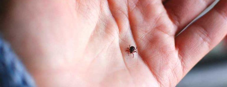 La maladie de Lyme reste un sujet de préoccupation cet été