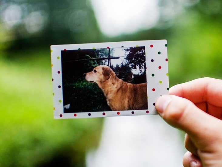 Pourquoi la perte de votre animal de compagnie pourrait être le plus difficile à supporter