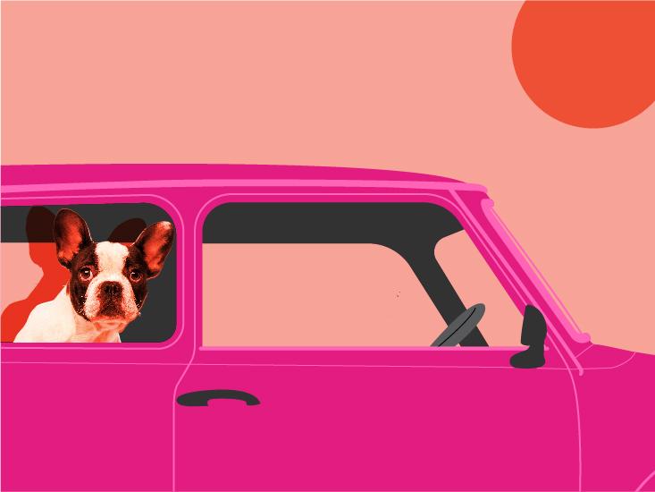 les voitures chaudes peuvent devenir mortelles pour les chiens