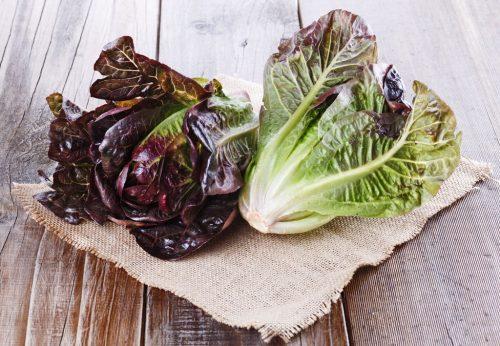 Rødbladsalat
