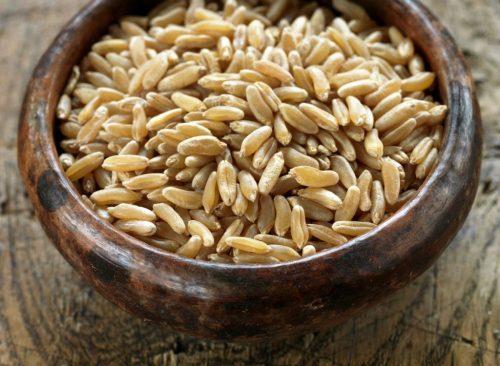 Grain de Kamut