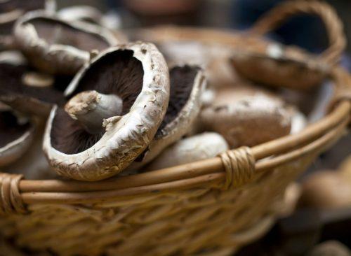 Champignons Portobello
