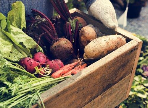 légumes biologiques dans une boîte en bois