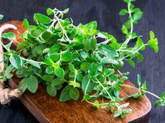 15 herbes impressionnantes avec activité antivirale