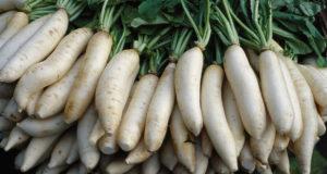18 légumes uniques et sains