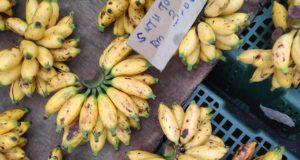 Types uniques de bananes