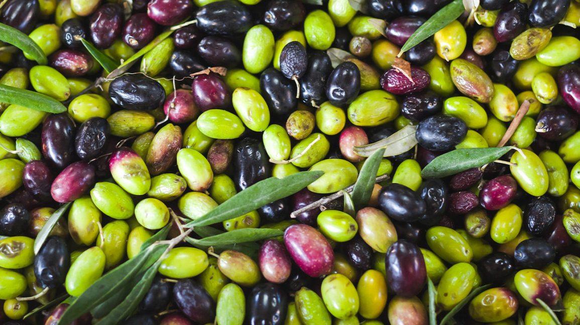 olives fraîchement cueillies
