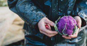 16 aliments violets délicieux et nutritifs