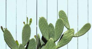 L'eau de cactus est-elle bonne pour vous?
