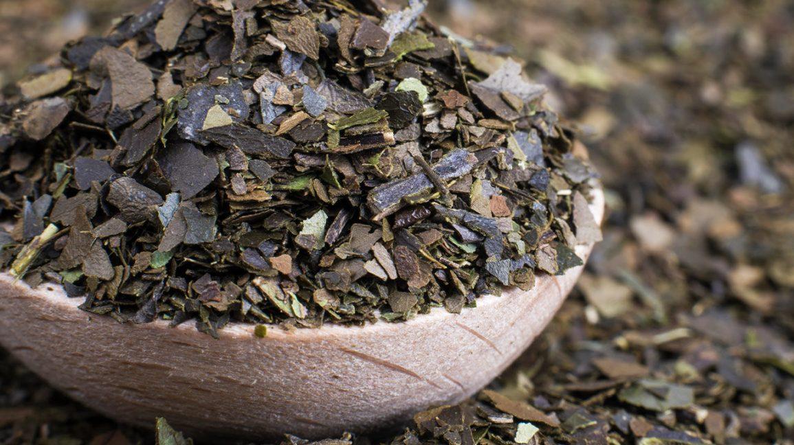 feuilles de guayusa séchées