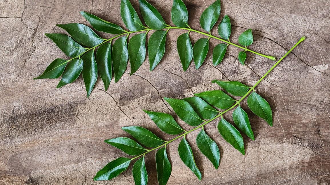 feuilles de curry
