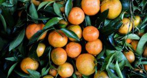 Mandarines et les clémentines