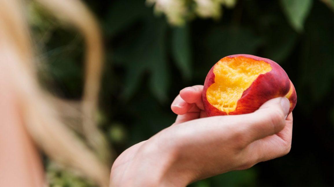 nectarines : prendre une bouchée de nectarine