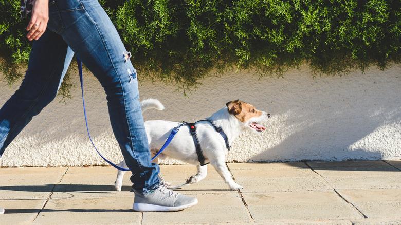 personne promenant un chien